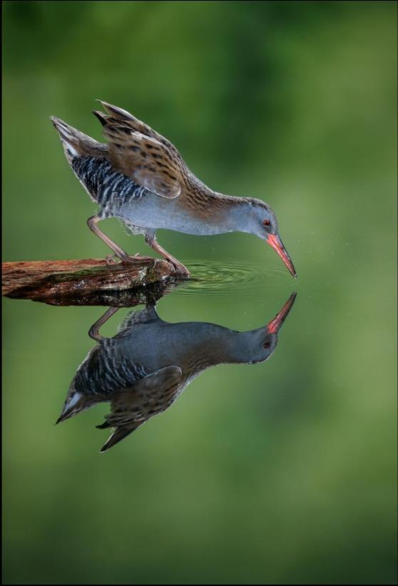 pouvoir-magique-attraction-imagination-wordpress-univers-abondance-visualisation-oiseau2