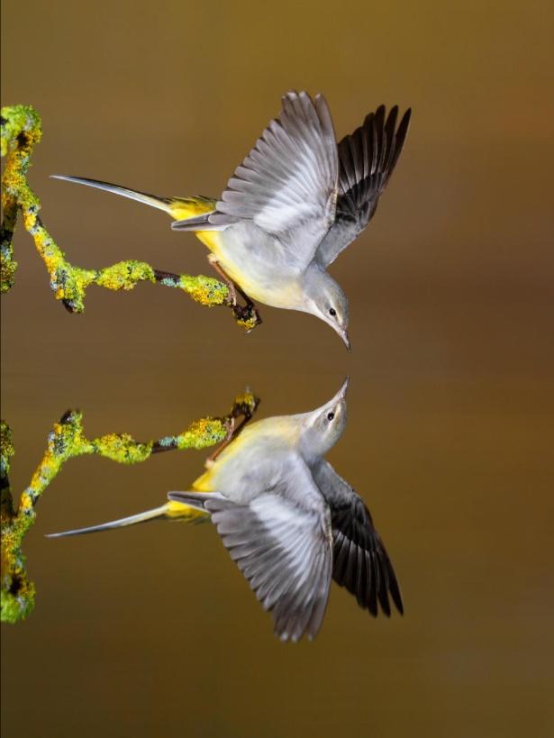 pouvoir-magique-attraction-imagination-wordpress-univers-abondance-visualisation-oiseau3